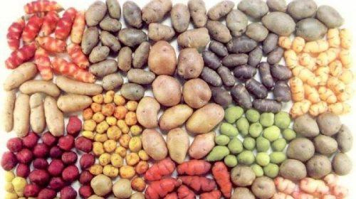 Физиологические последствия употребления картофеля