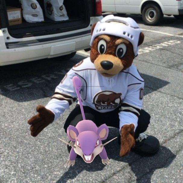 Bears and Pokemon