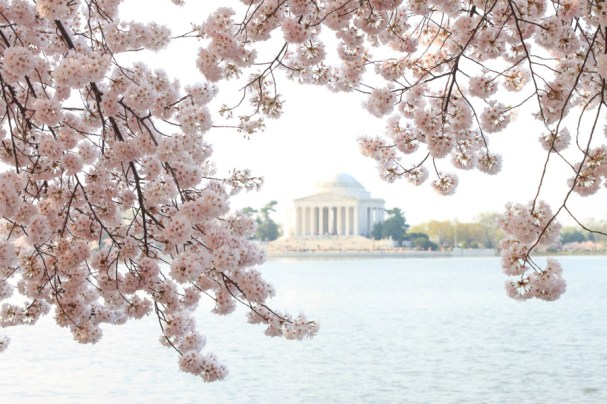 CherryBlossoms (11 of 21)
