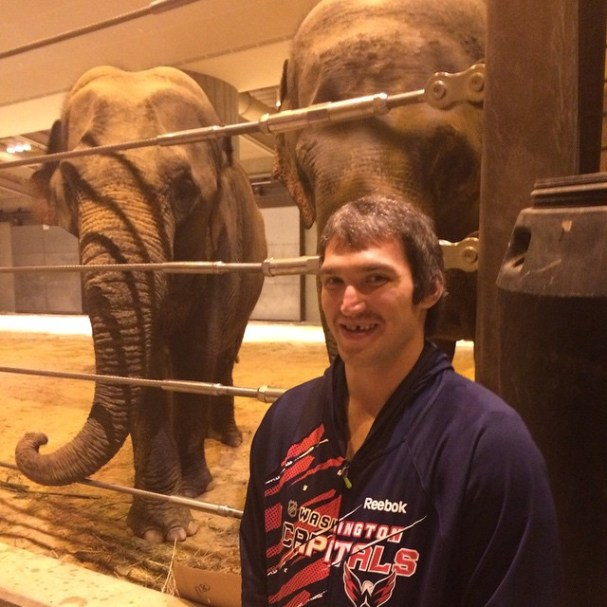 alex-ovechkin-elephants-national-zoo