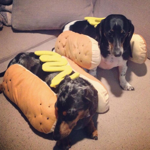 karl-alzner-dogs-halloween