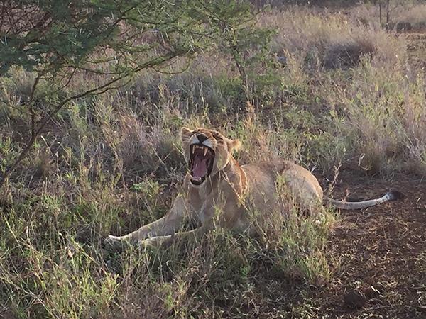 laich-safari3