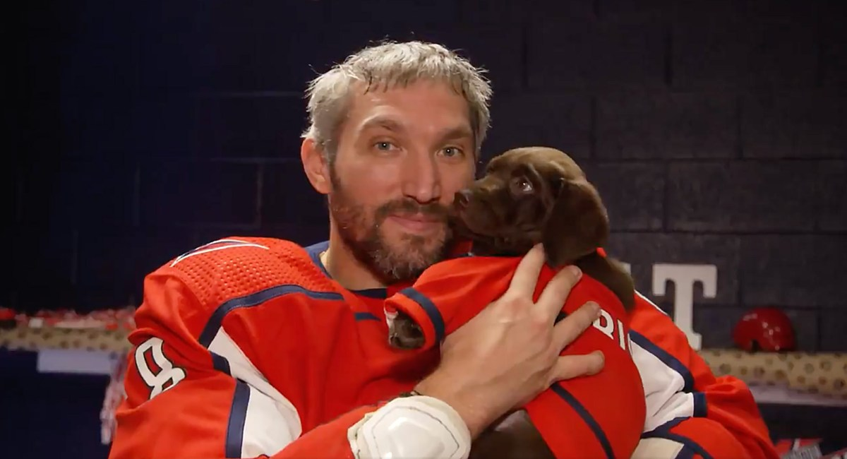 The Capitals have a new team dog. His name is Biscuit and he's freaking adorable!