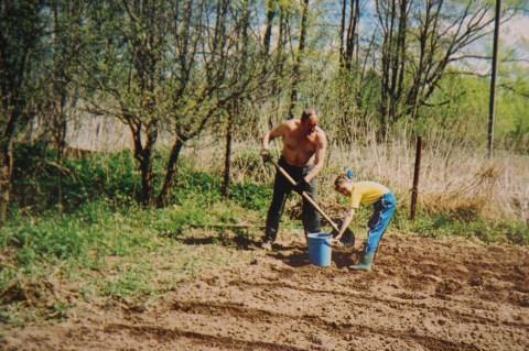 Potatoes Planting