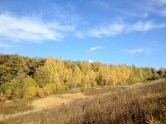 Forest in Russia. Autumn.