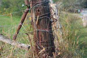 rusty barb wire fence