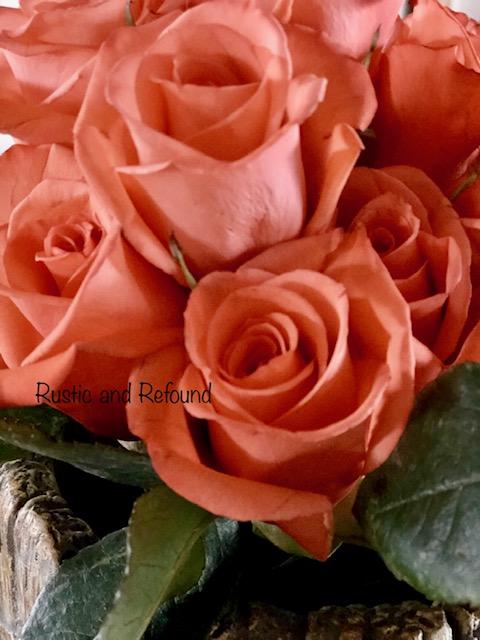 P roses close up