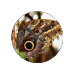 Rustic Country Owl Butterly on Tree Round Clock