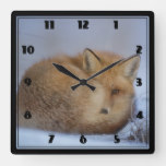 Cute Little Fox Curled Up Winter Photo Square Wall Clock