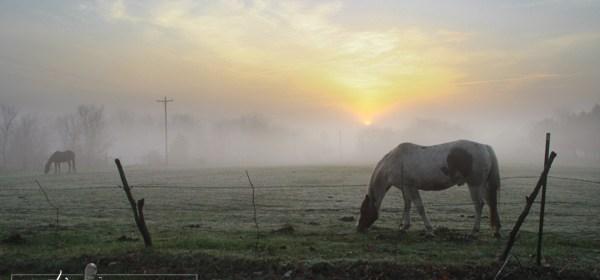 Foggy Farm Photos & Recent Storms