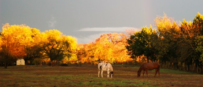 Fall Sunset On The Farm