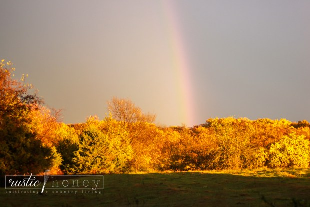 sunset-rainbow-after-rain-fall-leaves (2 of 12)