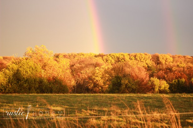 sunset-rainbow-after-rain-fall-leaves (8 of 12)