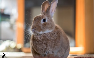 What It's Really Like to Live with House Rabbits