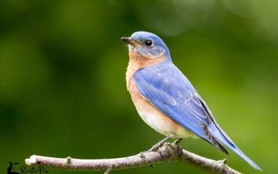 Eight Surprising Benefits of Bird Watching