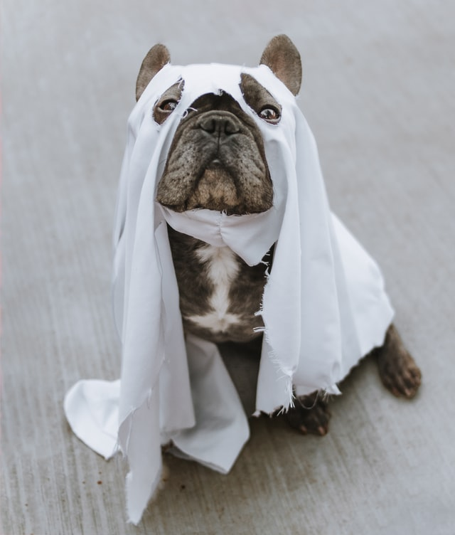Spooky Frenchie Ghost