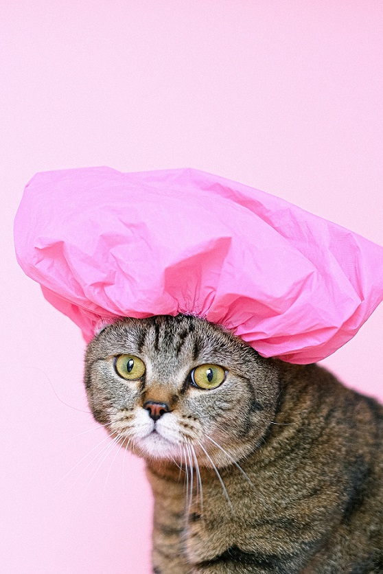 Brown tabby cat with pink shower cap