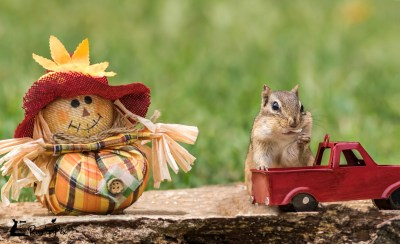 chipmunk red truck scarecrow