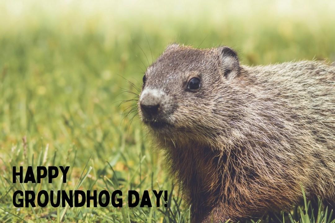 groundhog kit in grass happy groundhog day (2)
