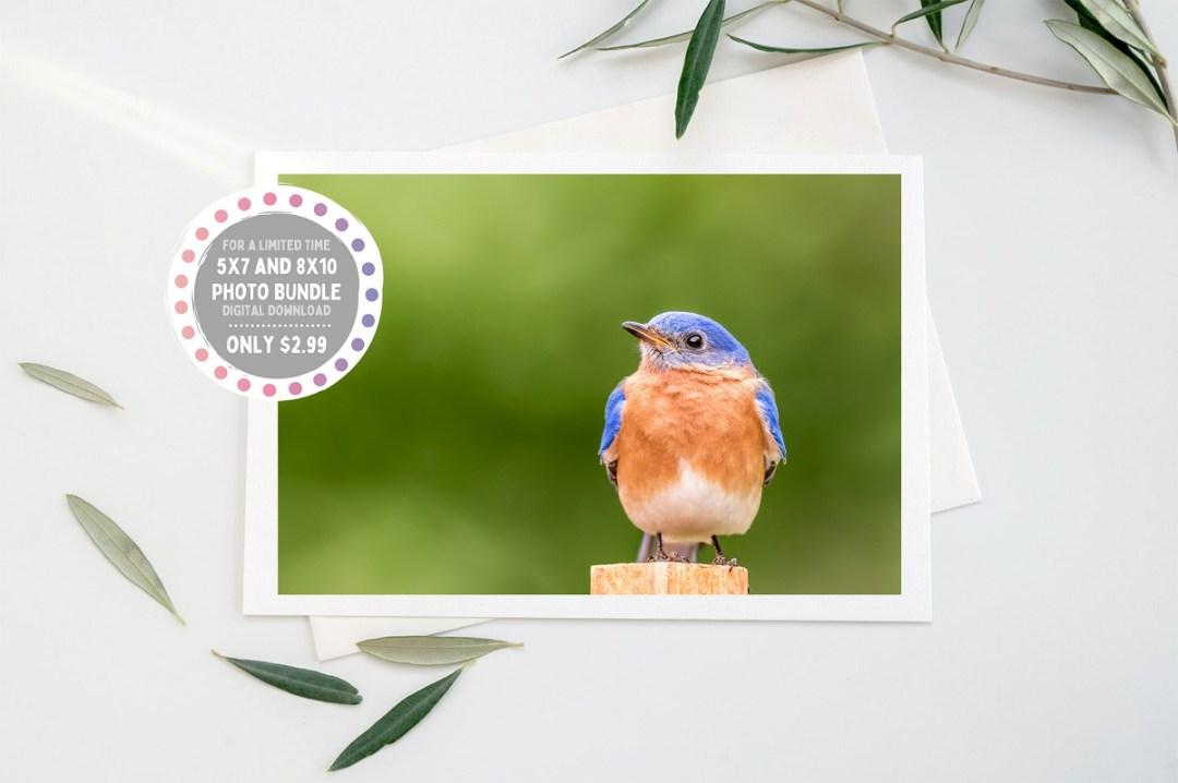 bluebird perch etsy