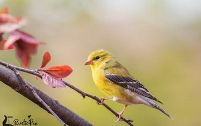 Early Spring Birding:  Five Favorite Birds
