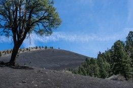 Lava Flow Trail Flagstaff 1