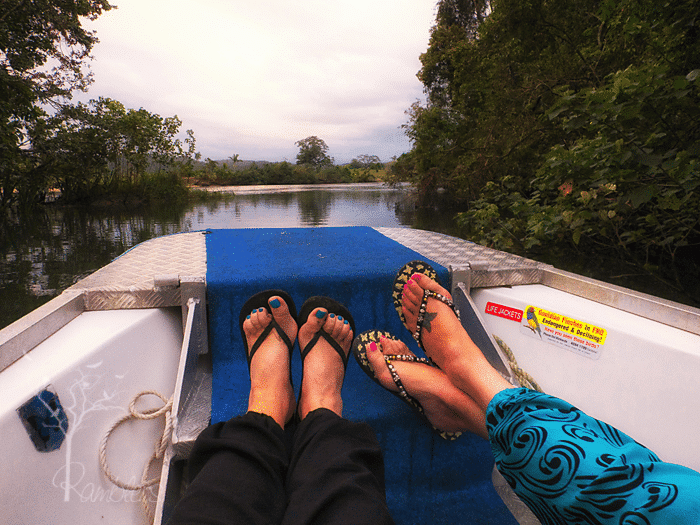 Daintree River, morning cruise