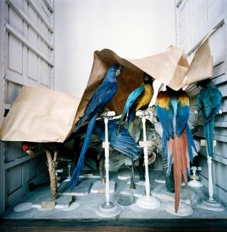 Museum National D'Histoire Naturelle, Paris, 1982