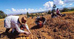 fidel-sanchez-alayo-importancia-agricultura-ganaderia-peru