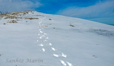 Camino de Peña Blanca