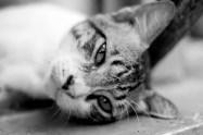 CAT BANGKOK
