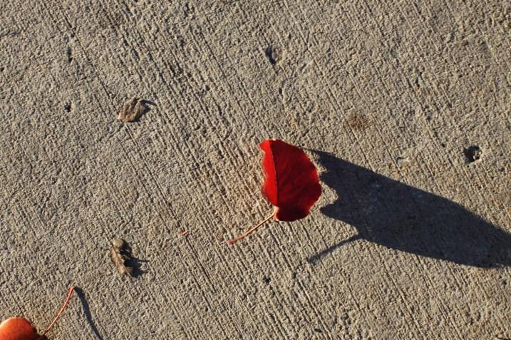 Tiny leaf-big shadow