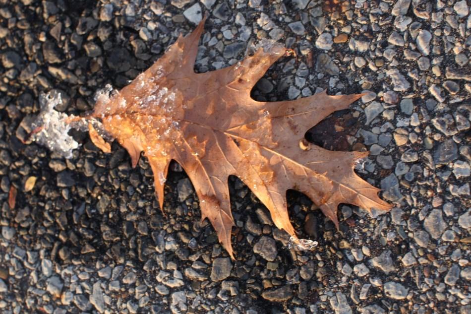 autumn leaf popsicles 1