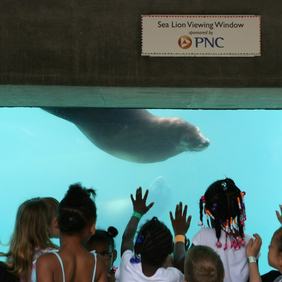 Sea Lion Viewing Window