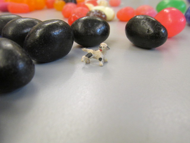 mini dog and jelly beans