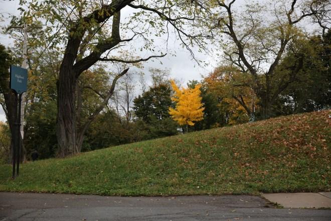 Golden Leaf Tree