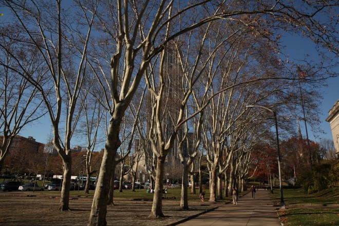 the trees without leaves
