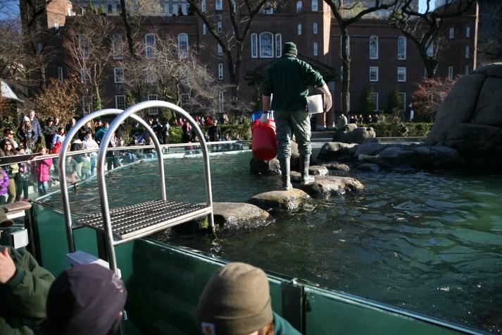 Central Park Sea Lion