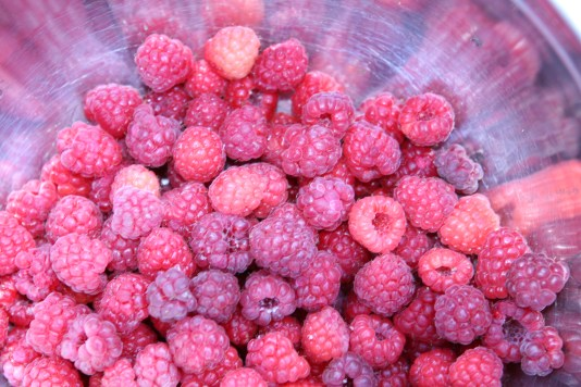 Fresh Raspeberries just picked in Okanogan WA