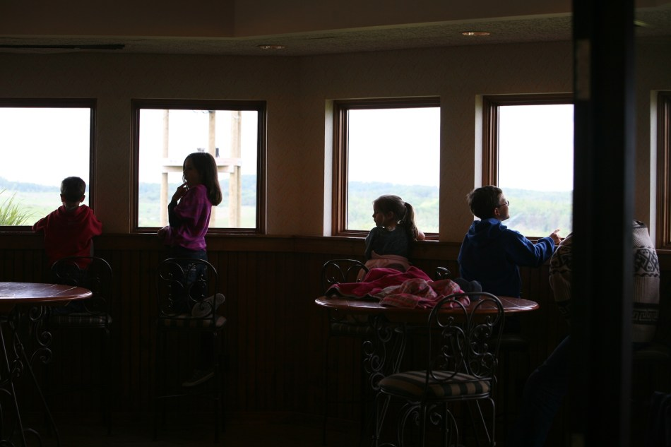 The Wilds windows