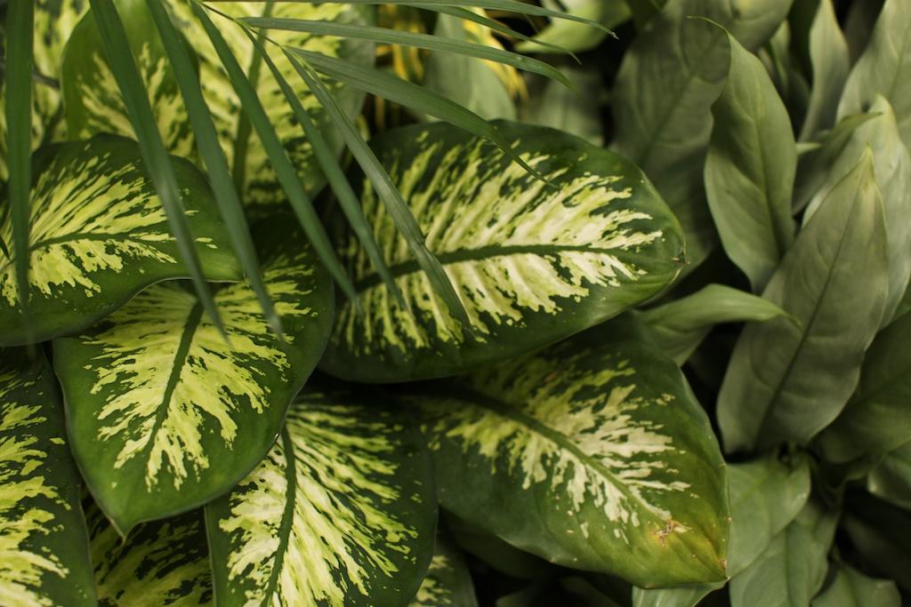 greens (1)