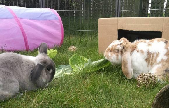 My Boys - Bandit and Pumpkin