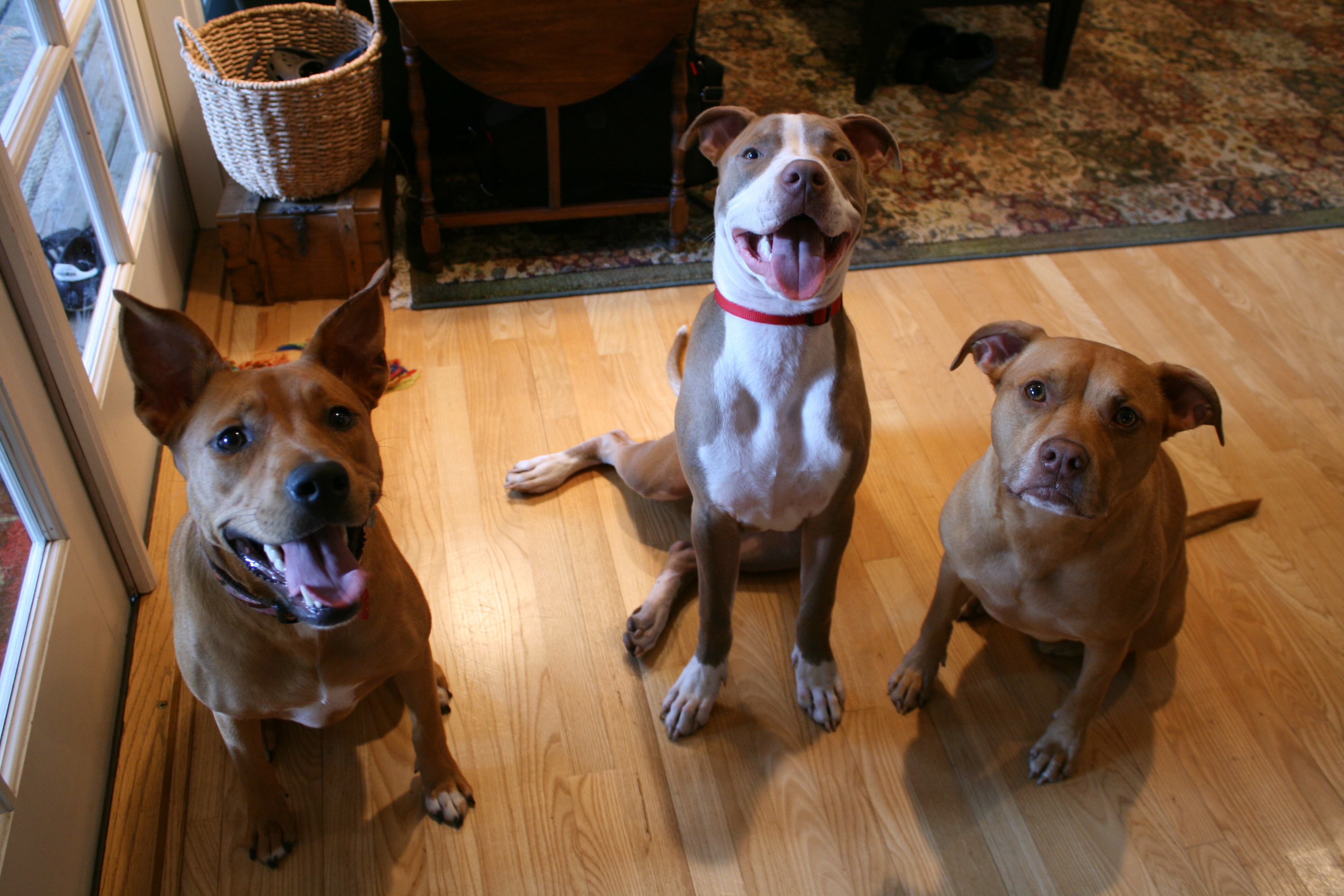 stella, max and hailey