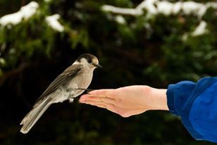 Birdwatching on acreage and wetland