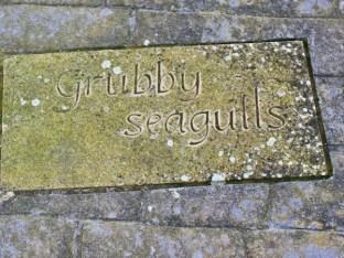 Grubby seagulls