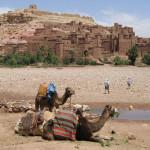 camels-at-the-kasbah-1623260-639x460