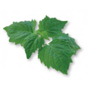 patchouli for hair conditioner