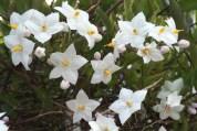 Jan flower 1