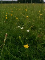 Wildflowers in grass