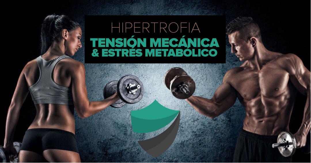 Hipertrofia: estrés metabólico y tensión mecánica